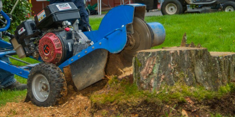 Stump grinding Ottawa
